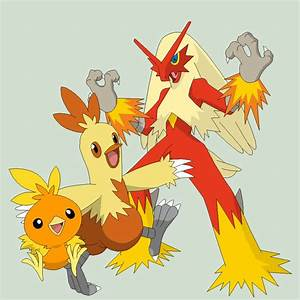 Pokemon Torchic Evolution Images | Pokemon Images