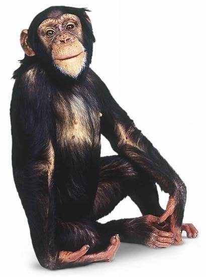 Monkey Pngimg