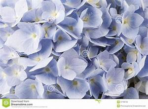 Blue Flowers stock image. Image of nobody, floral, leaf ...