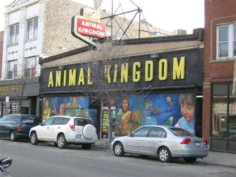 animal kingdom   lost stores  chicago