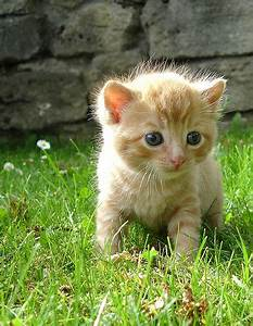 Cute Baby Animals for 2010 | Artism and All That