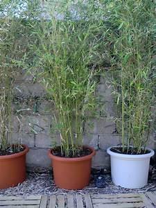 Bambous En Pot : bambous en pot ma ruine ~ Melissatoandfro.com Idées de Décoration
