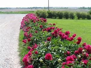 Perennial Zone 7 that will Adorn Your Beautiful Garden