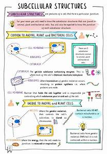 Get Your Free Gcse Biology Revision Notes On Subcellular