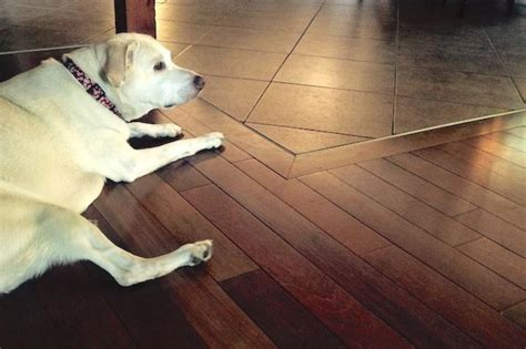House Counselor Answers    Protect Hardwood