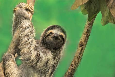 oregon conservation center offers sloth slumber party