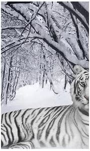 Best 35 Bengal Tiger Pictures and Wallpapers | Tiger ...