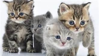 los gatos and cat estas las 8 enfermedades que transmiten los gatos