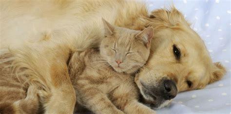 canape pour chien chiens chats chevaux quand les phéromones
