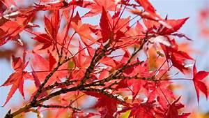 Bäume Und Sträucher Für Den Garten : b ume und str ucher richtig pflanzen und pflegen themen ~ Michelbontemps.com Haus und Dekorationen