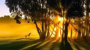 Sunrise, Morning, Fog, Trees, Sun, Rays, Wallpaper