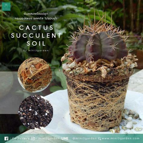 8 Cactus Soil ดินแคคตัส ดินกระบองเพชร ไม้อวบน้ำ ideas ...