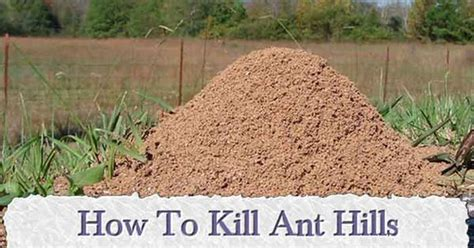 kill ant hills   natural ingredient ant