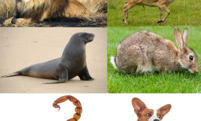 types  animals   amaze  styles