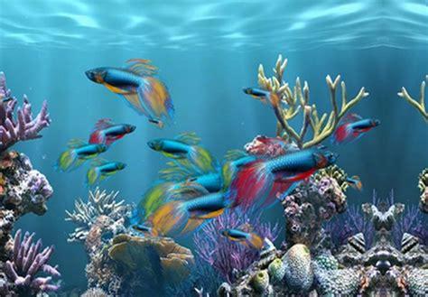 aquarium fond d ecran fond d ecran aquarium magnifique