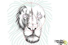 draw  cartoon lion step  step drawing tutorials