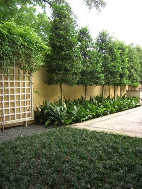 best 25 privacy plants ideas on privacy