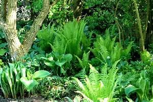 Heimische Pflanzen Für Den Garten : pflanzen f r den garten wei silbrige pflanzen f r den ~ Michelbontemps.com Haus und Dekorationen