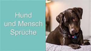 Flöhe Hund Mensch : hund und mensch spr che youtube ~ Yasmunasinghe.com Haus und Dekorationen