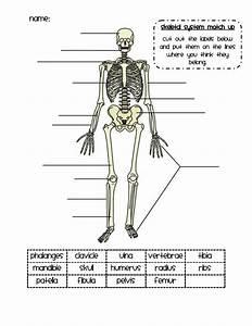 25  Best Ideas About Skeletal System On Pinterest