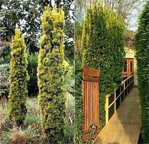 Sichtschutz Pflanzen Pflegeleicht : garten sichtschutz aus pflanzen ~ A.2002-acura-tl-radio.info Haus und Dekorationen