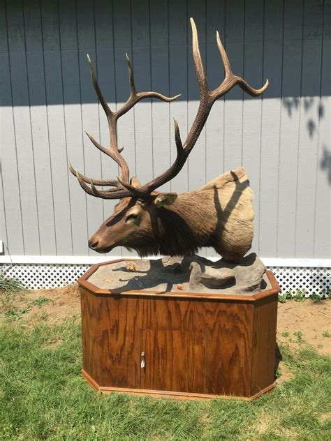 elk head mount taxidermy  base local pickup  ebay