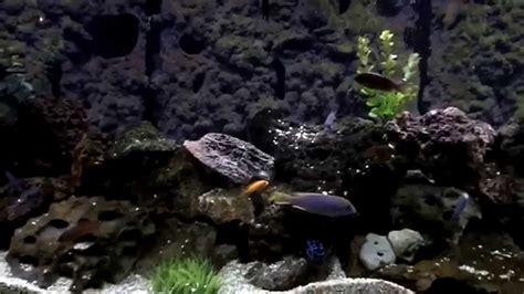 spray foam aquarium background  aquarium ideas
