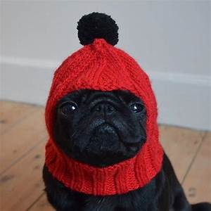 Bubba The Black Pug Startseite Facebook