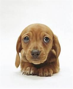 Who can resist sad puppy dog eyes? | Cute Stuff ...