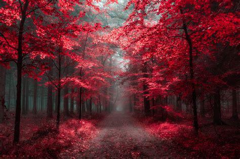 oer wouts deviantart gallery