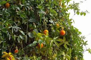 Page juin au jardin fleurs et arbustes 2012