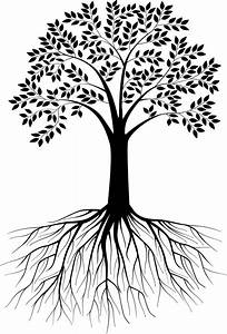 Black and white tree silhouette with roots - VectorStock ...