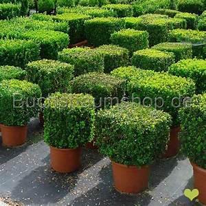 Hortensie Umpflanzen Im Topf : buchsbaum w rfel 50x50x50cm im topf gewachsen 25l ~ Orissabook.com Haus und Dekorationen