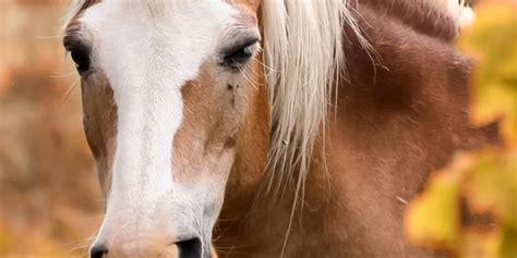 pferdefutter pferd und futter