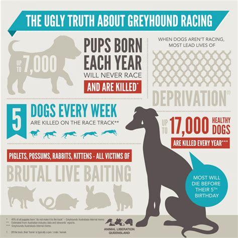 greyhound racing animal liberation queensland