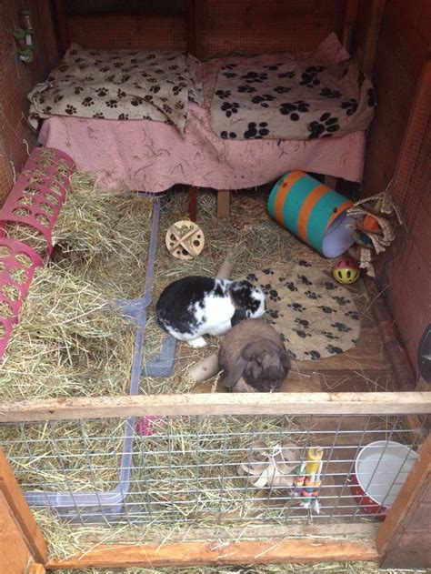 my rabbit is shedding 20 best images about ideas for my rabbit shed on