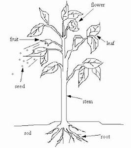 science with alice about plants With wiringpi non root