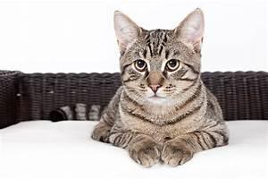 Katzen Fernhalten Von Möbeln : shooting mit der eigenen katze tierfotograf thore scheu ~ Michelbontemps.com Haus und Dekorationen