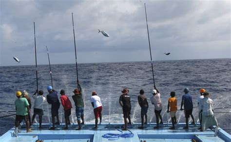 fishing maldives fish market line traditional tuna attractions male pole male credit themaldivesexpert