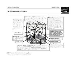 vcc lc worksheets anatomy physiology