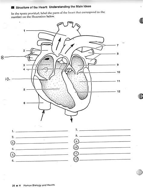 Blank Human Heart Diagram  Learning Me  Heart Diagram, Anatomy, Human Heart Diagram