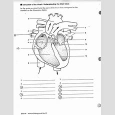 Blank Human Heart Diagram  Learning Me  Heart Diagram, Human Anatomy, Physiology, Human Heart