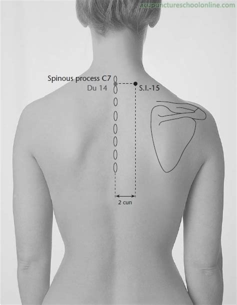 acupuncture grossesse si e the acupuncture points located on the canine shoulder are