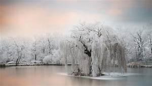 frozen, tree, , u2013, bing, wallpaper, download