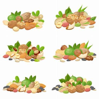 Nuts Nut Vector Fruit Seeds Dried Bunch