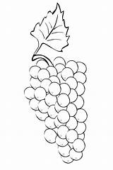 Grapes Coloring Bunch Pages sketch template