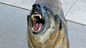 vicious dogs ordinance definition to be addressed