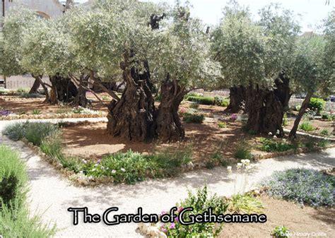 Garden Of Gethsemane Bible by The Mount Of Olives Century Jerusalem Bible