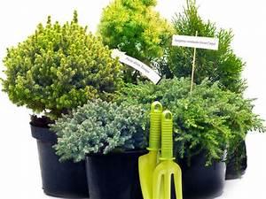 Immergrüne Pflanzen Für Balkonkasten : nadelh lzer auf balkon und terrasse ~ Markanthonyermac.com Haus und Dekorationen