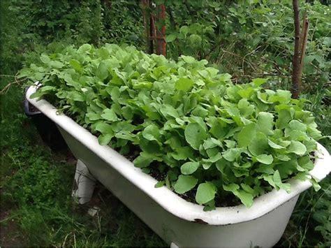 Badewanne Bepflanzen Im Garten by Badewanne Im Garten Badewanne Im Garten Bepflanzen